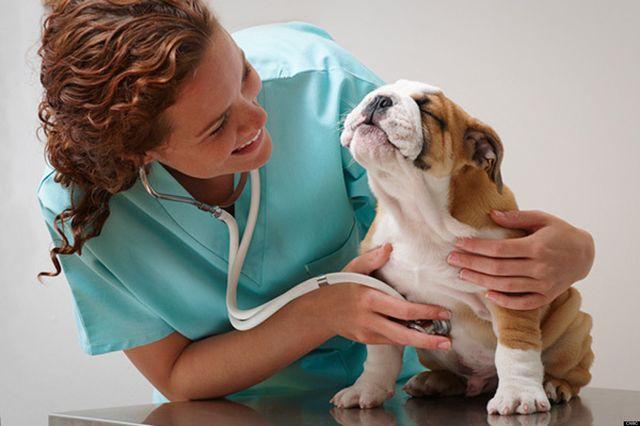oxygenterapy animals
